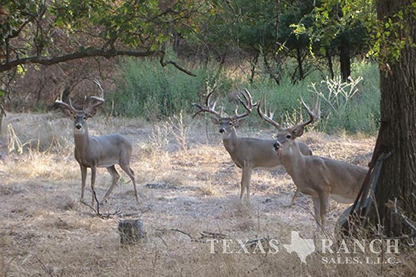 Ranch sale 134 acres, McLennan county image 1