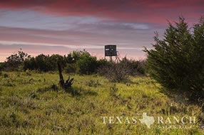 Ranch real estate image 316 acres Sutton County