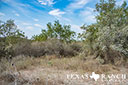 44 acre ranch Uvalde County image 11