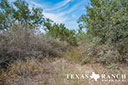 44 acre ranch Uvalde County image 12