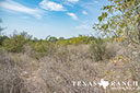 44 acre ranch Uvalde County image 14