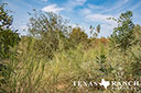 44 acre ranch Uvalde County image 15