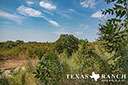 44 acre ranch Uvalde County image 17