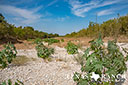 44 acre ranch Uvalde County image 19