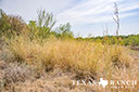 44 acre ranch Uvalde County image 4