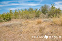 44 acre ranch Uvalde County image 7
