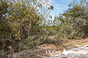 44 acre ranch Uvalde County image 9