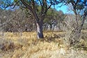 793 acre ranch Kimble County image 18